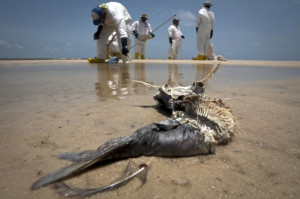 ... that Deepwater Horizon Oil Spill Contaminated Ocean Food Chain