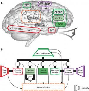 Spaun, functional brain simulation