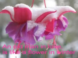 An Old Man In Love Is Like a Flower In Winter ~ Beauty Quote