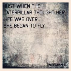 ... quotes gonna fly new beginnings quotes new beginning quotes keep going