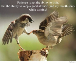 Funny Animal Pictures Quotes: Life Of The Birds In The Tree Funny ...