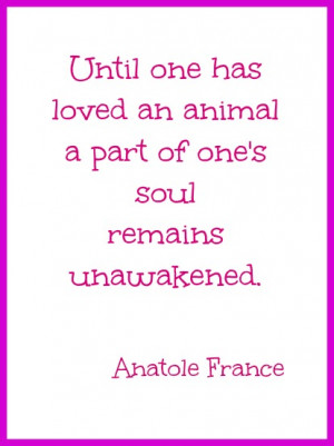 Quotes About Losing a Pet