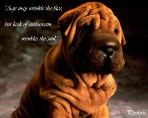 Animals and Life Quotes