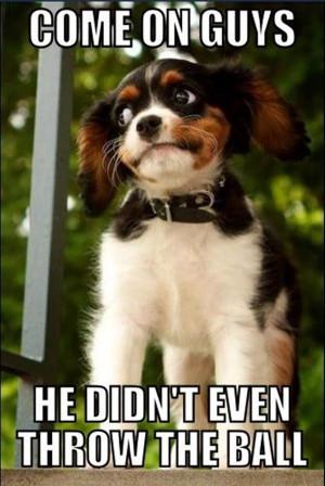 funny-cute-animal-memes-7