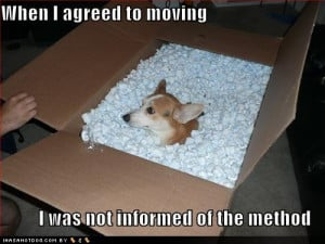 funny-dog-pictures-agreed-to-moving.jpg