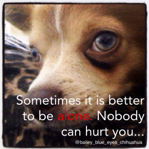 Blueeyes chihuahua quote love life