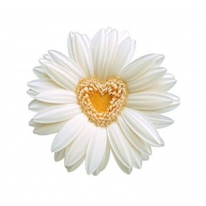 daisy Rose beauty sexy nature cute Love 400x382 Bookmarks #1306195 - P ...
