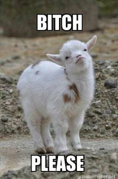 Quotes About Goats Quotesgram
