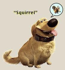 up squirrel