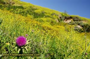 Purple Flower on Yellow Hillside