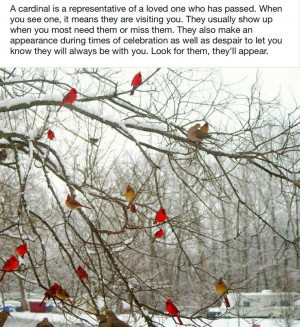 Cardinals are special visitors.