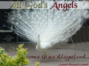 god took an angel quotes