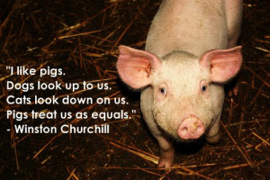 Quote about pigs from Winston Churchill