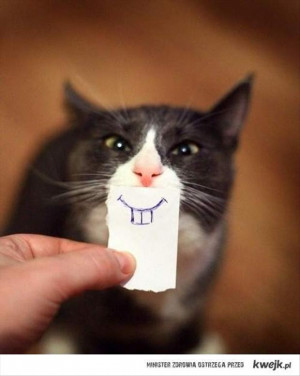 Cat Funny Cats Imitate Famous