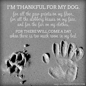 so thankful for my dogs.