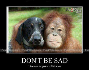 Don't be sad funny monkey and dog