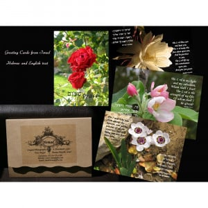 Bible Greeting Cards (Set of 8) - Israel365