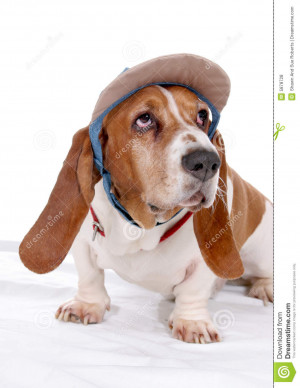 Basset Hound With Party Hat