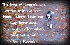 ... death and heal the pain you're feeling. Our lost dogs and cats are