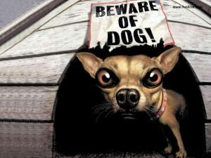 Funny Dog Sayings 9663 Hd Wallpapers