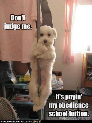 Dog on a Stripper Pole