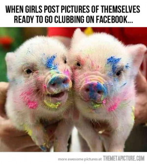 Funny photos funny pigs make up
