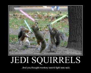 may the force be with you as you gather nuts this must be a battle ...