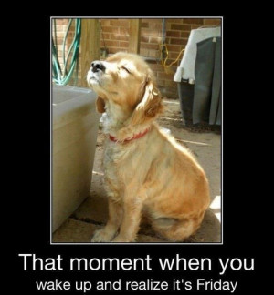 ... dog that moment when you wake up and realize it s friday ah friday