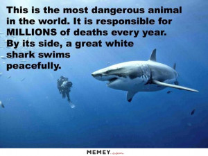 Diver And A Great White Shark