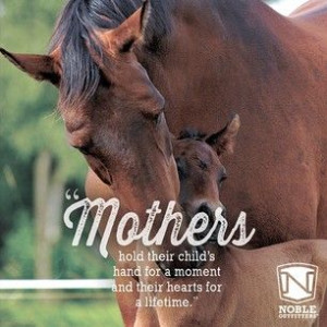 Happy Mother's Day to all you super moms, horse show moms, and moms of ...