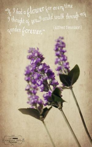 lavender, quote, texture