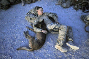 Belgian Malinois With Army Solider