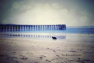 Vintage Film Tolkien Quote Dog Beach Blue Sand Fine Art Photography ...