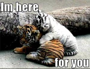 Animal Humor tiger funny