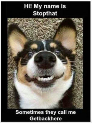 Top 30 Funny animal Memes #Memes