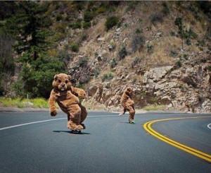 Bears on boards...