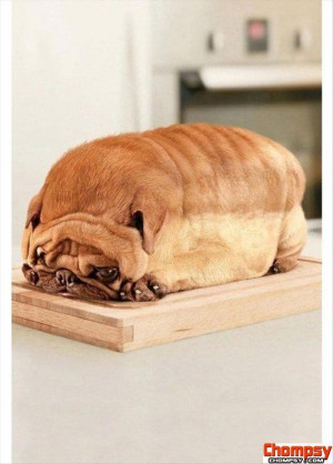 pug dog loafunny photos of bread
