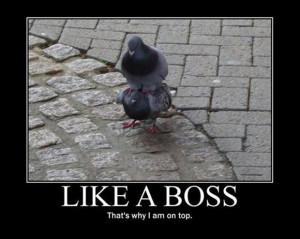 like a boss, bacon wrapped (12)