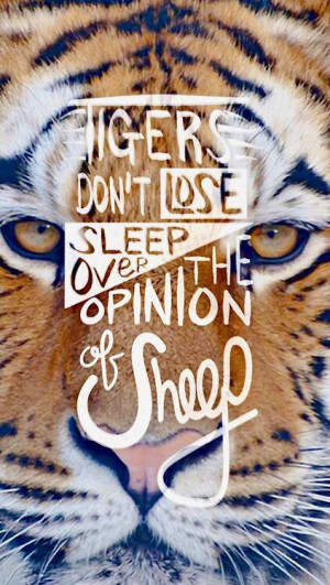 quote #wisdom Tigers don't lose sleep over the opinion of sheep.