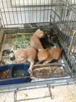 homeless animals in turkey - animal-rights Photo