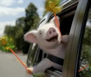 Gotta love Maxwell the Geico pig.