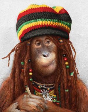 Funny Monkey Smoking…