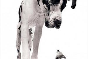 Great Dane | funny-pics.co