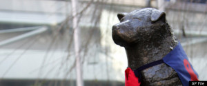 Death Of Hachiko, Legendary Japanese Dog, Explained