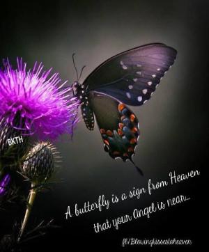 Beautiful Butterflies from HeavenBeautiful Butterflies, Nature, Little ...
