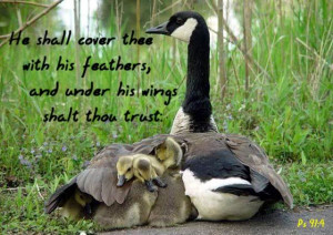 ... ://www.pics22.com/bible-quote-he-shall-cover-tree-with-his-feathers
