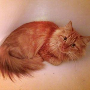 ... kitten #cat #hhha #hiltonheadhumaneassociation #adopt #rescue #love