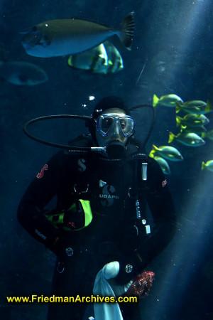... ocean,fish,diving,scuba,hobby,recreation,leisure,wet suit,mask,diver