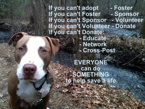 Animal Shelter is a volunteer run not-for-profit, no-kill animal ...