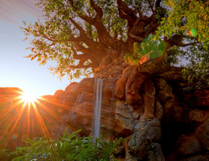 ... Animal Kingdom and marks the dawn of a new Disney theme park